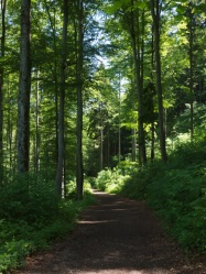start-of-path-3944