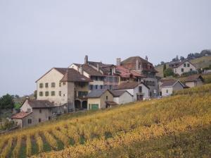 Lavaux  5005