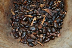 Toasted cacao beans. Image Credit: Wikimedia Commons