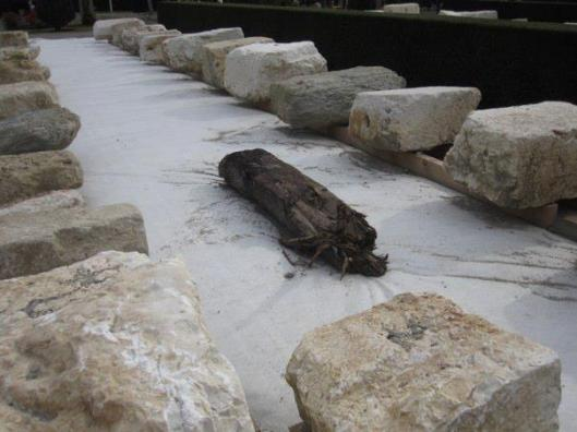 These Roman stones came from the Mausoleum of the Centurion, just like the ones in the Carouge Mairie.  The bridge beam is circa 1100, and was located roughly where the Fontenette bridge is today.  These were all found while building a new apartment building.