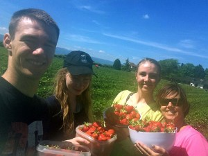 Strawberries in Gy