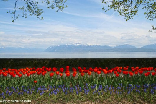 jdombs-travels-morges-tulip-festival-4
